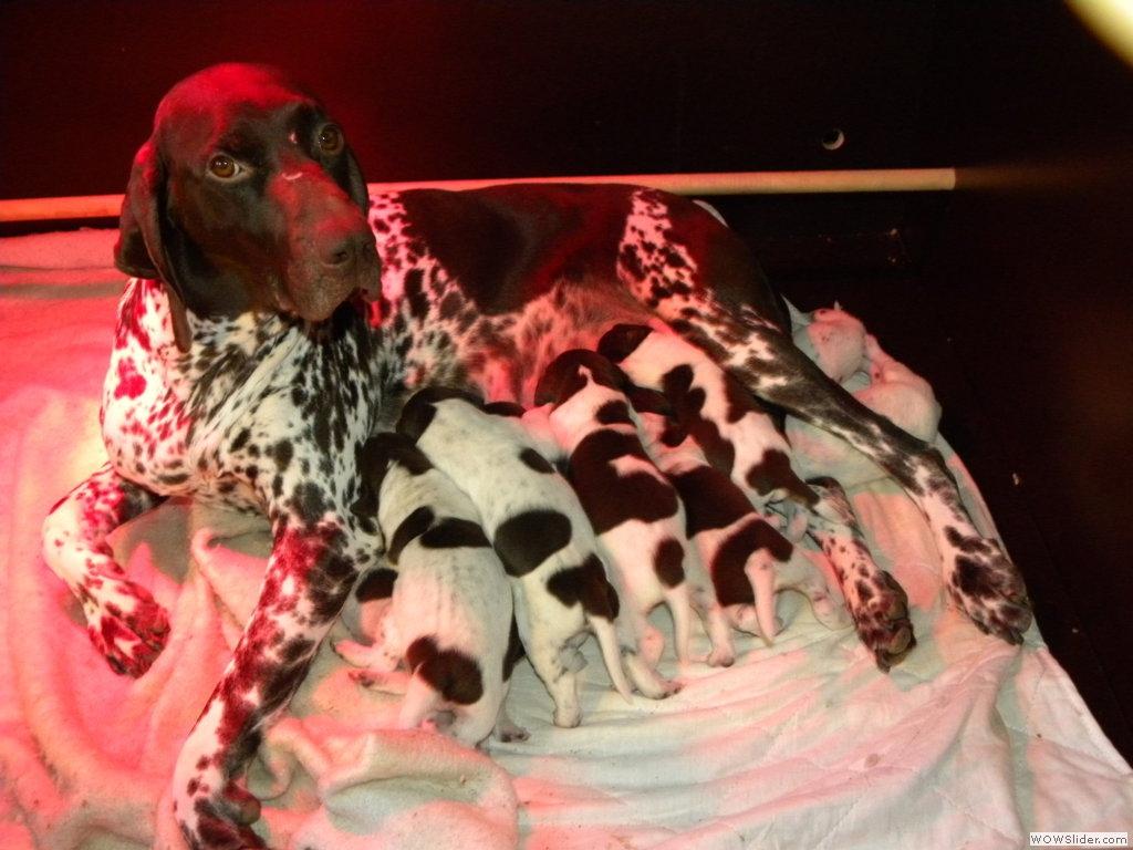 Chanel en haar pups